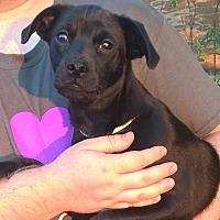 Adopt A Pet :: Phoenix - Orlando, FL