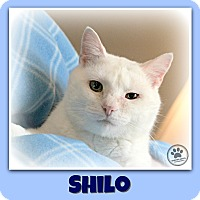 Adopt A Pet :: Shilo - Indianapolis, IN