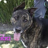 Adopt A Pet :: NIKKI - Camarillo, CA