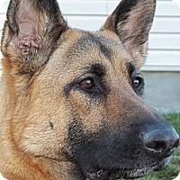 Adopt A Pet :: Sage - Rigaud, QC