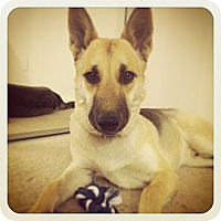 Adopt A Pet :: Roscoe - North Hollywood, CA