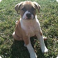 Adopt A Pet :: Colbi (One of Molly's Pups) - Sacramento, CA