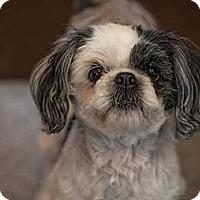Adopt A Pet :: Josie & Sassy - Denver, CO