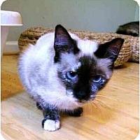 Adopt A Pet :: Almond - Wakinsville, GA