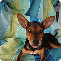 Adopt A Pet :: MINNIE - Atascadero, CA