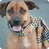 Adopt A Pet :: Emma AKA KAi - Canoga Park, CA