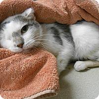 Adopt A Pet :: One Eye - Maywood, NJ