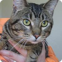 Adopt A Pet :: Jordy - Menomonie, WI