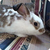 Adopt A Pet :: Bailey and Lucky - Watauga, TX