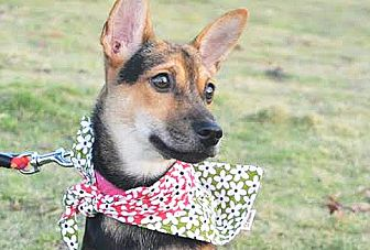 Shepherd (Unknown Type) Mix Puppy for adoption in San Francisco, California - Lulu