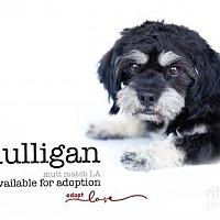 Adopt A Pet :: Mulligan - Castaic, CA