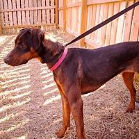 Adopt A Pet :: Violet - Palmyra, NE