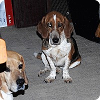 Adopt A Pet :: Mia EP - Albuquerque, NM