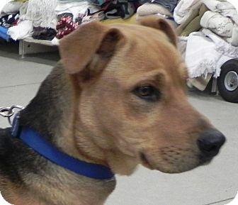 Retriever (Unknown Type) Mix Dog for adoption in Buffalo, Wyoming - Jordan