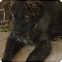 Adopt A Pet :: Donna - Glastonbury, CT