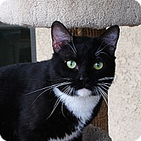 Adopt A Pet :: Toby - Palmdale, CA