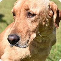 Adopt A Pet :: Kylee - New Canaan, CT