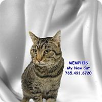 Adopt A Pet :: Memphis - West Lafayette, IN