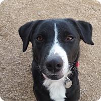 Adopt A Pet :: Reva - Scottsdale, AZ