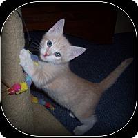 Adopt A Pet :: Mookie - South Plainfield, NJ
