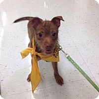 Adopt A Pet :: Hufflepuff - Lakeville, MN