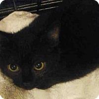 Adopt A Pet :: A414227 - San Antonio, TX