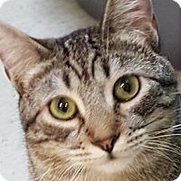Adopt A Pet :: Rod Taylor - Auburn, CA