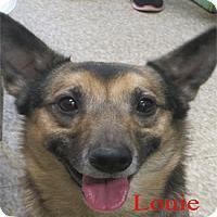 Adopt A Pet :: Louie - Warren, PA