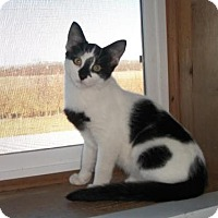 Adopt A Pet :: Fineas - Lacon, IL