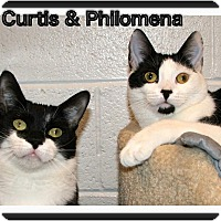 Adopt A Pet :: Philomena - Atco, NJ