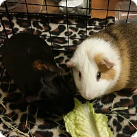 Adopt A Pet :: Jazzy & Rosie - South Bend, IN