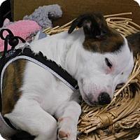 Adopt A Pet :: Bailey - Sparta, WI