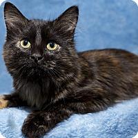 Adopt A Pet :: Rizzo - Mt. Prospect, IL