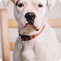 Adopt A Pet :: Nona - Portland, OR