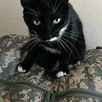 Adopt A Pet :: Helena (0676-T) Adopted - Tampa, FL