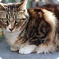 Adopt A Pet :: Mitsy - Redondo Beach, CA