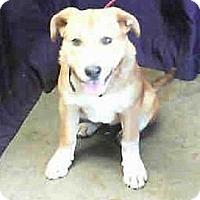 Adopt A Pet :: Emma - Seattle, WA