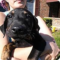 Adopt A Pet :: Hercules - South Jersey, NJ