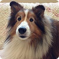 Adopt A Pet :: Connor - San Diego, CA