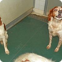 Adopt A Pet :: Winston - Albuquerque, NM