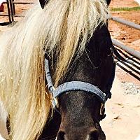 Adopt A Pet :: Spice - Guthrie, OK