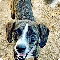 Adopt A Pet :: Jazzy - Fort Valley, GA