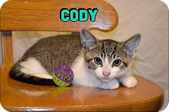 Domestic Shorthair Kitten for adoption in Trevose, Pennsylvania - Cody