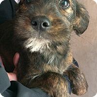 Adopt A Pet :: Lilac - Kittery, ME
