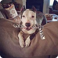 Adopt A Pet :: Ziva - Durham, NC