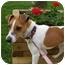 Photo 3 - Jack Russell Terrier Dog for adoption in Omaha, Nebraska - Maggie