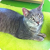 Adopt A Pet :: Smoothie - Topeka, KS