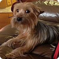 Adopt A Pet :: Tx - Benji - Yakima, WA