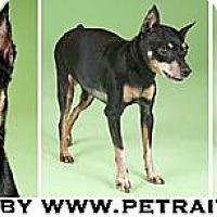 Adopt A Pet :: Sheba - Chicago, IL