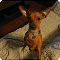 Adopt A Pet :: Jazzy - Swiftwater, PA